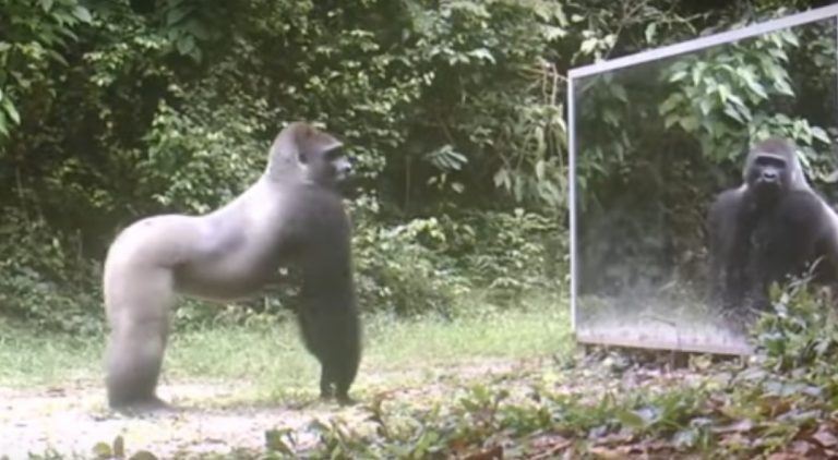 Animals React To A Mirror In The Jungle