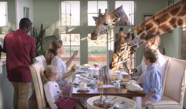 This Cafe In Nairobi Lets You Share Breakfast With Giraffes