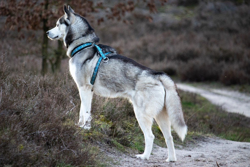 7 Tips To Take Care Of Your Husky During The Hottest Months