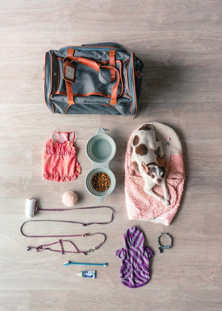 7 Tips On Travelling Abroad With Your Pet