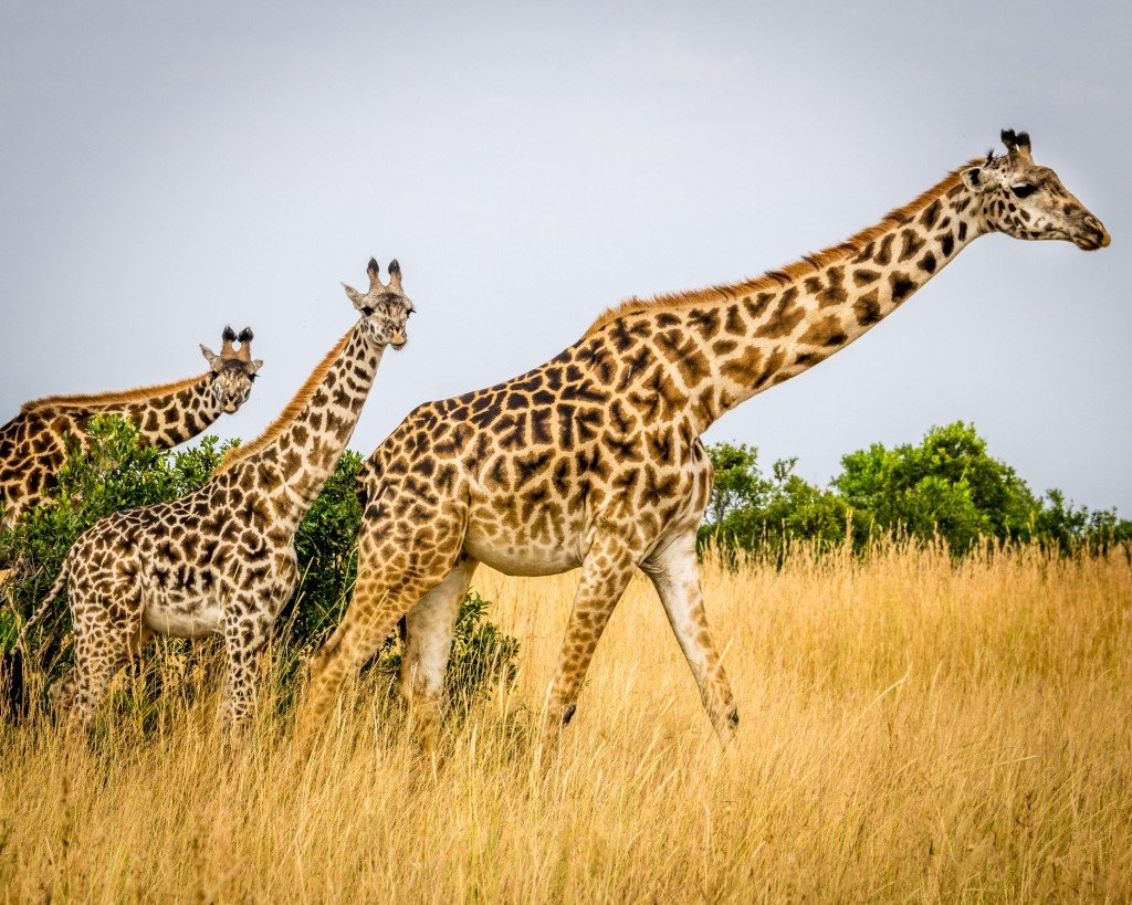 The Best Alternative To Zoos If You Want To See Exotic Animals