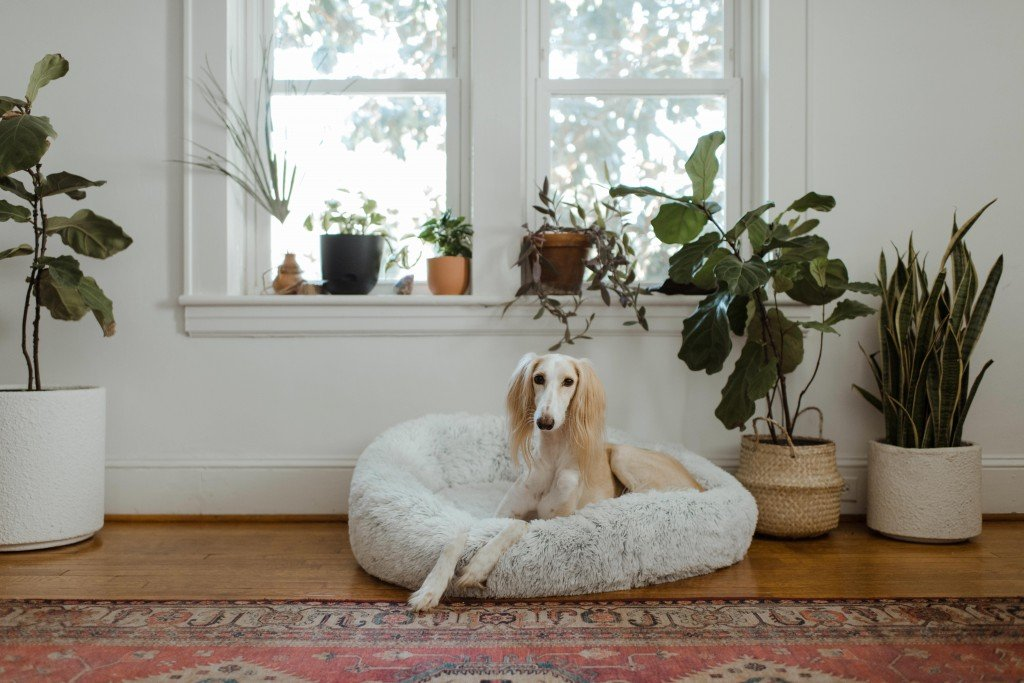 It's Okay To Have A Big Dog In A Small Flat?