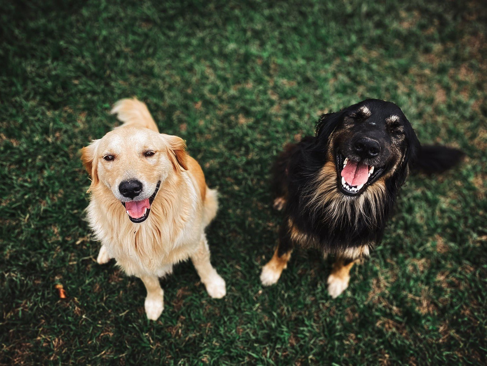 Can Dogs Differentiate Between Words And Similar Sounds?