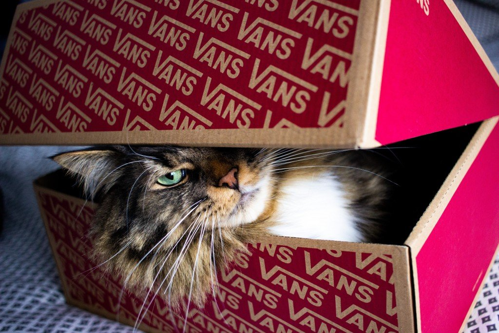 Why Are Boxes A Cat's Best Friend?