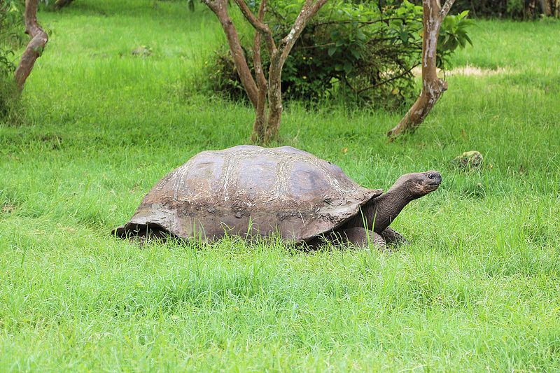 This Extinct Species Of Giant Tortoises Just Came Back To Life