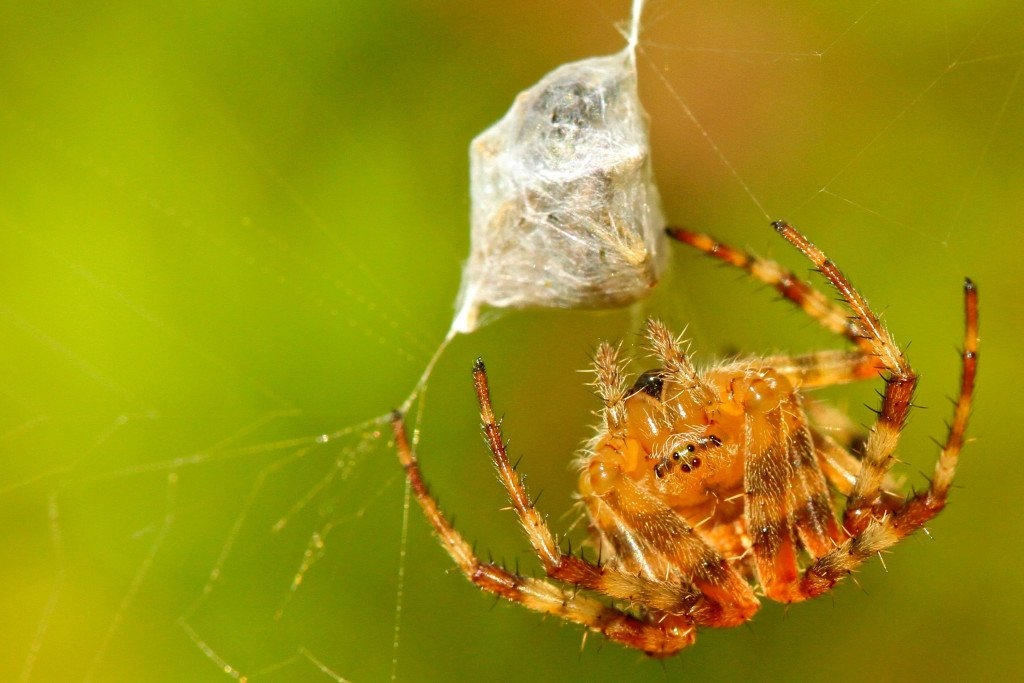 Spider Silk – A Fabric For The Future Of The Fashion Indistry