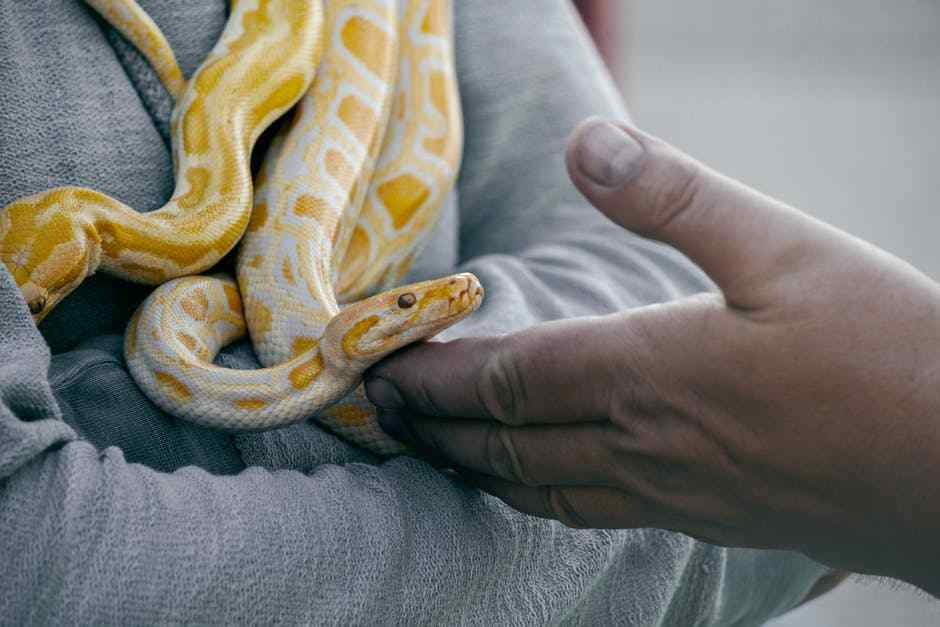 Scary Or Effective? Snake Massages For All Those Who Fancy Adventure!