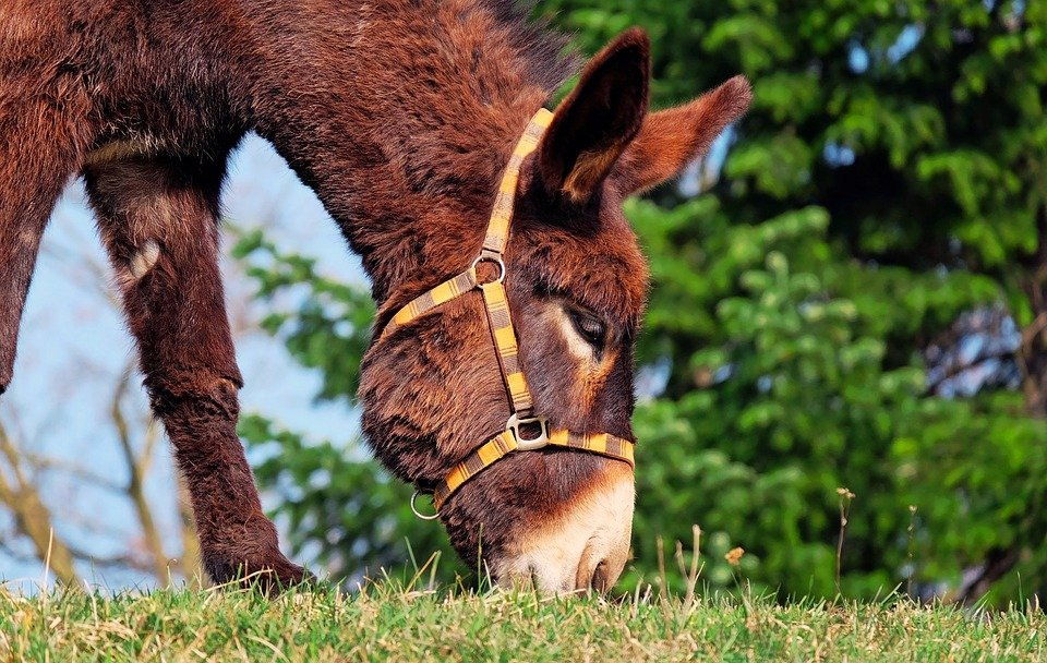 Donkey Nannies are a legit thing! The cuteness is unbearable!
