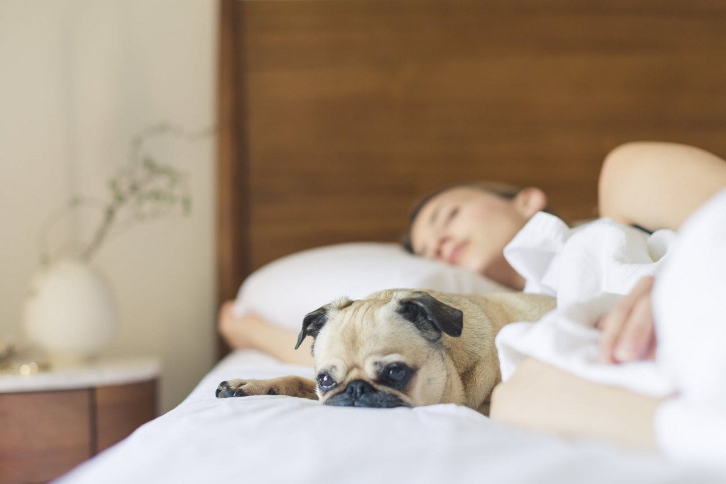 How To Sleep Better – Science Says Pets Are The Answer