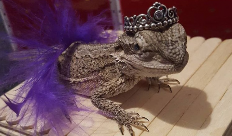 Forget Lizard Cosplay, Look At These Cosplaying Lizards Instead!