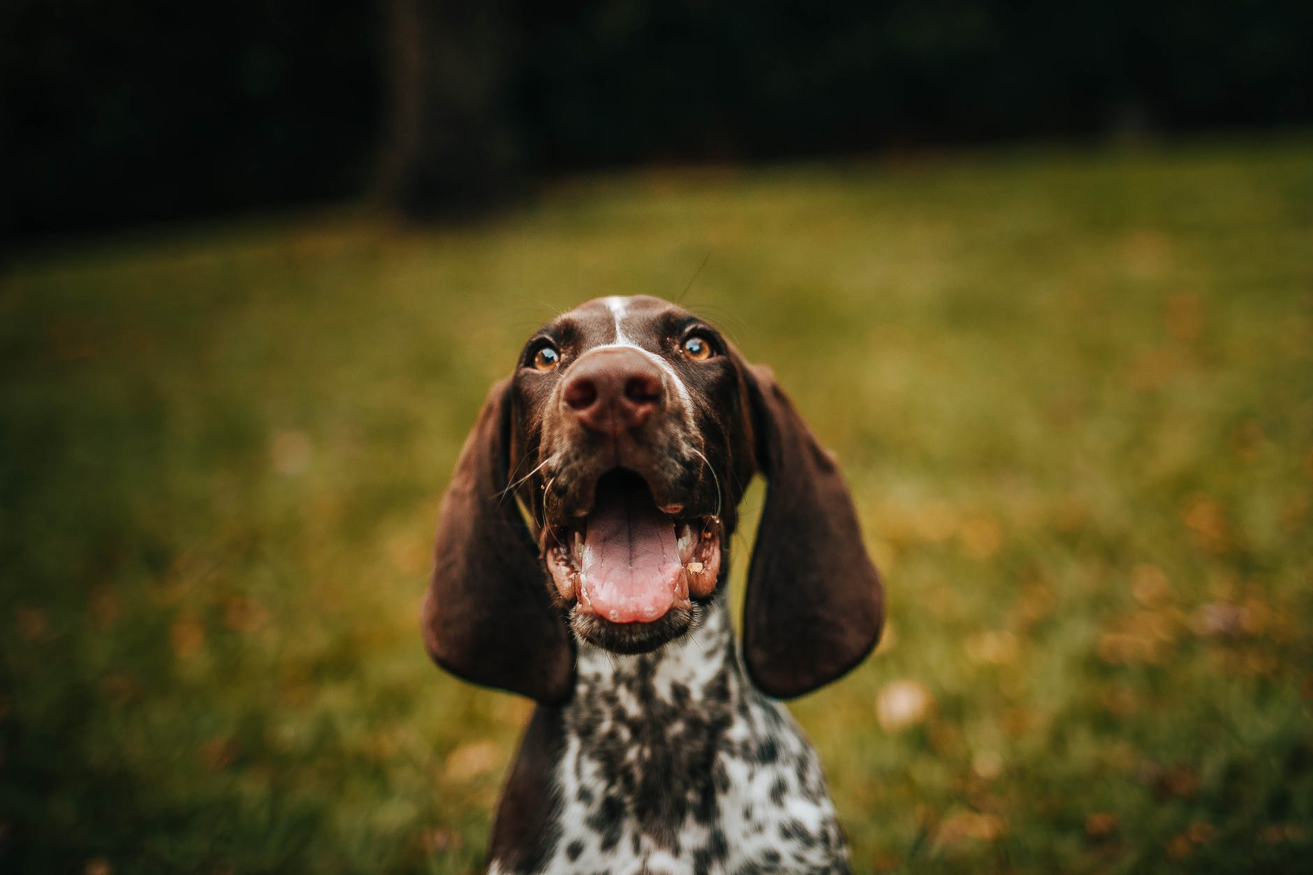 Is Your Dog Throwing Some Teenage Tantrums? If Yes, Then There Might Be A Reason Behind That!