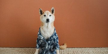 curious dog in clothes sitting on floor